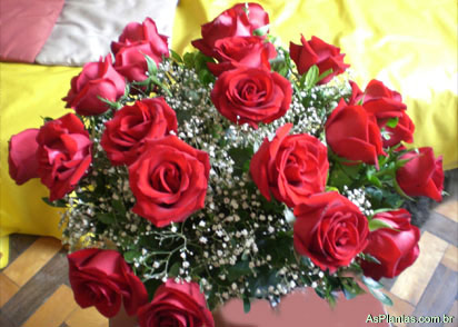 rosas - Plantas Ornamentais